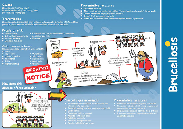 Brucellosis brochure
